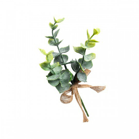 Jolie branche d'eucalyptus